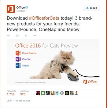 Office para gatos